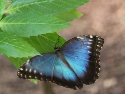 Papiliorama.ch