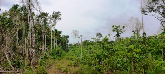 Wald Schutzgebiete